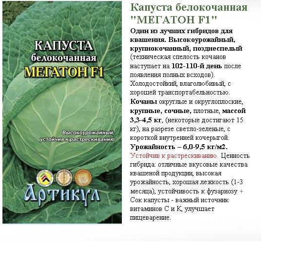 Капуста мегатон: описание и характеристика сорта, особенности посадки, выращивания и ухода + отзывы огородников
