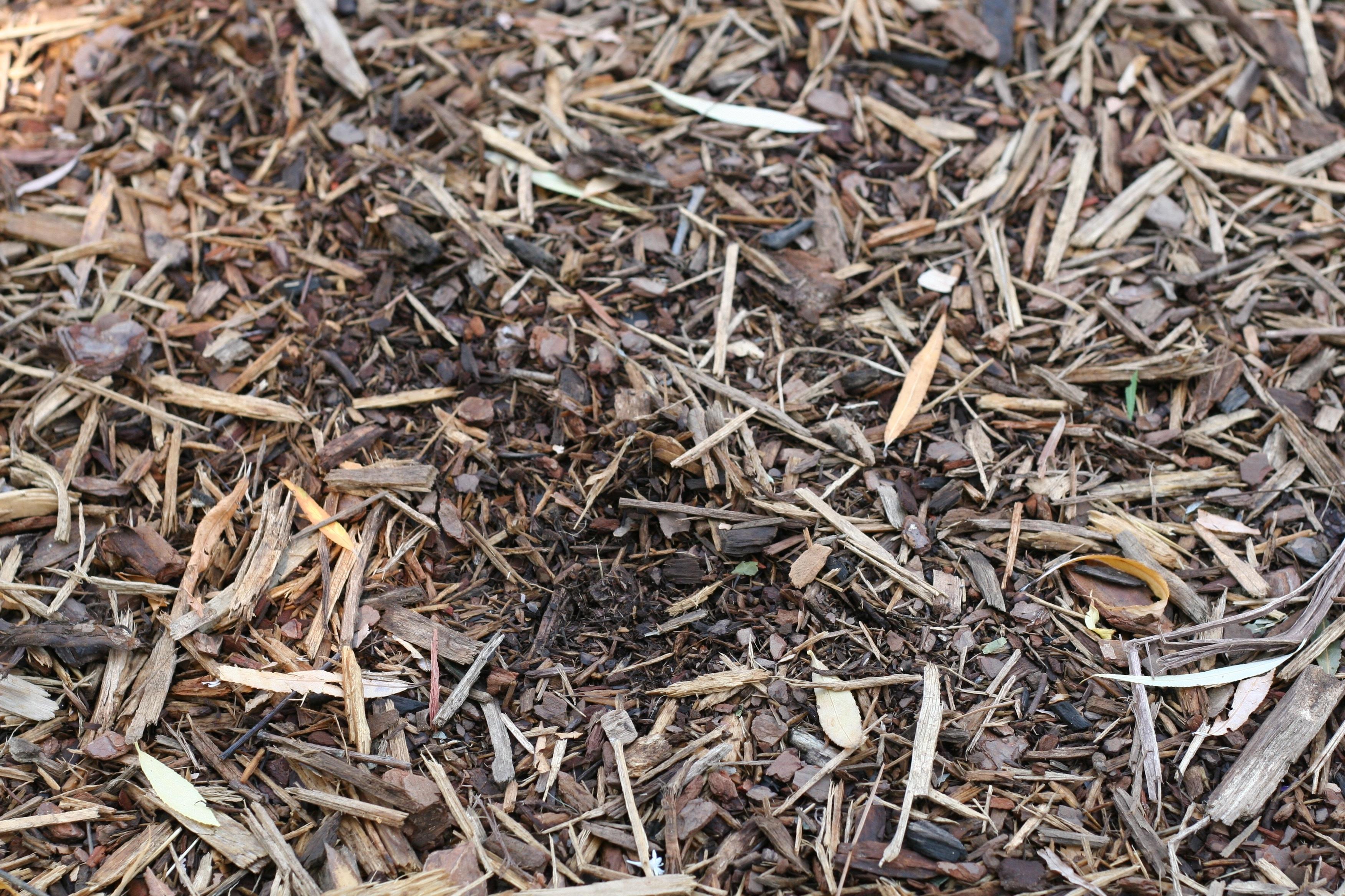 Мульчирование соломой клубники, чеснока, картофеля и других культур: как использовать такую мульчу осенью, где ее взять, плюсы и минусы, процесс нарезки