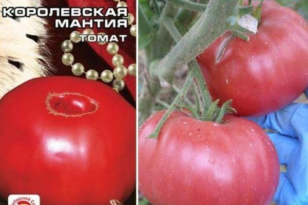 Характеристика крупноплодного томата Королевская мантия и агротехнические требования