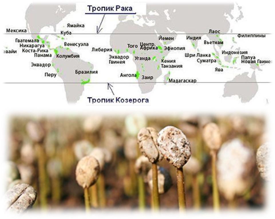 Кукуруза в сибири: подходящие сорта, посадка и уход, отзывы