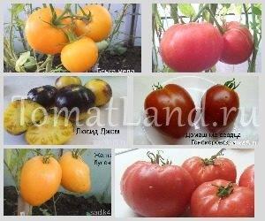 Редкие семена томатов от частного коллекционера