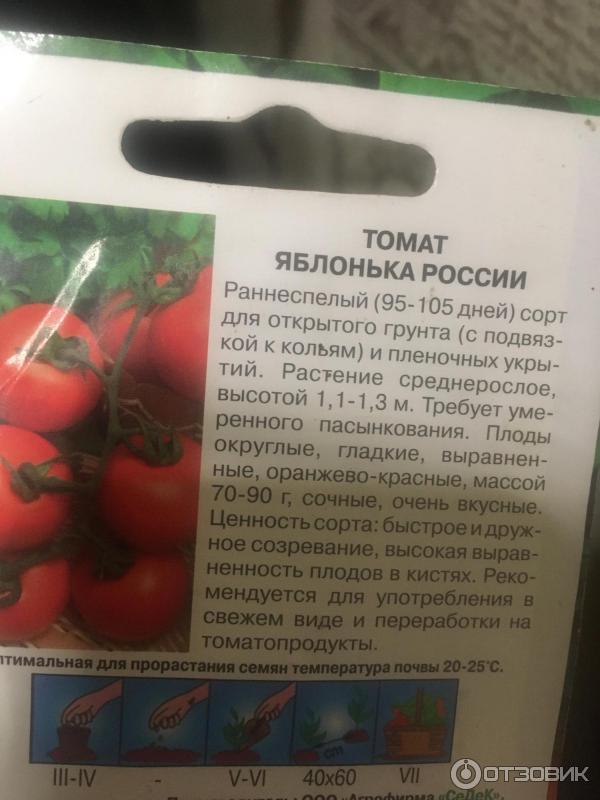 Яблонька россии — урожайный сорт помидоров для ленивых дачников