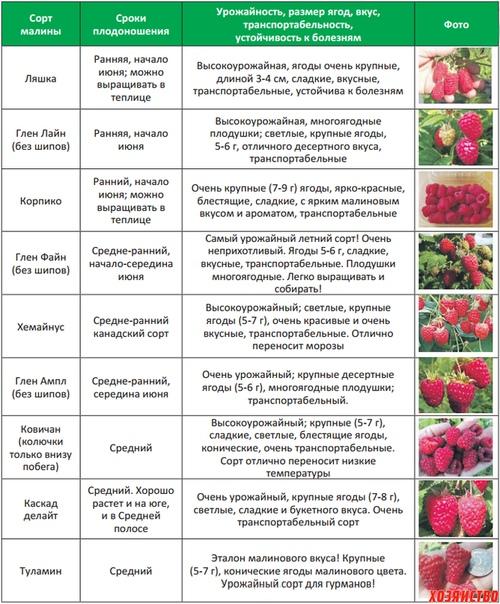 Лучшая ежевика для средней полосы россии: виды, обзор 10 популярных сортов с описанием и фото, плюсы и минусы, советы экспертов