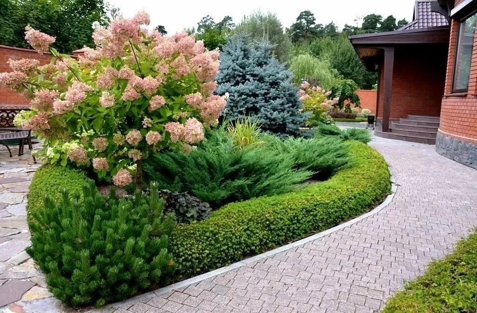 Хвойные в ландшафтном дизайне дачного участка | красивый дом и сад