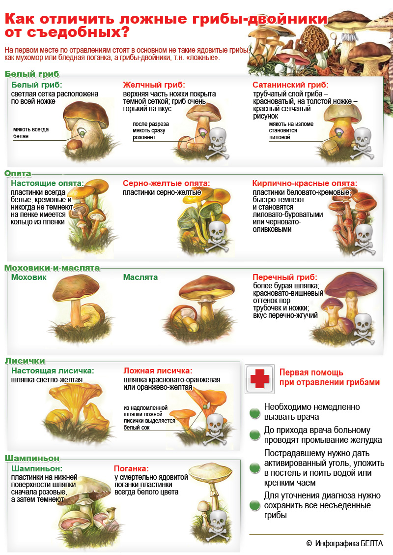 Какие грибы можно собирать в июле 2020 года в подмосковье без риска | tele4n.net