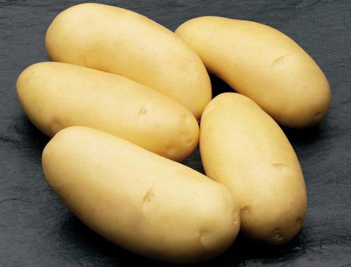 Описание картофеля зекура