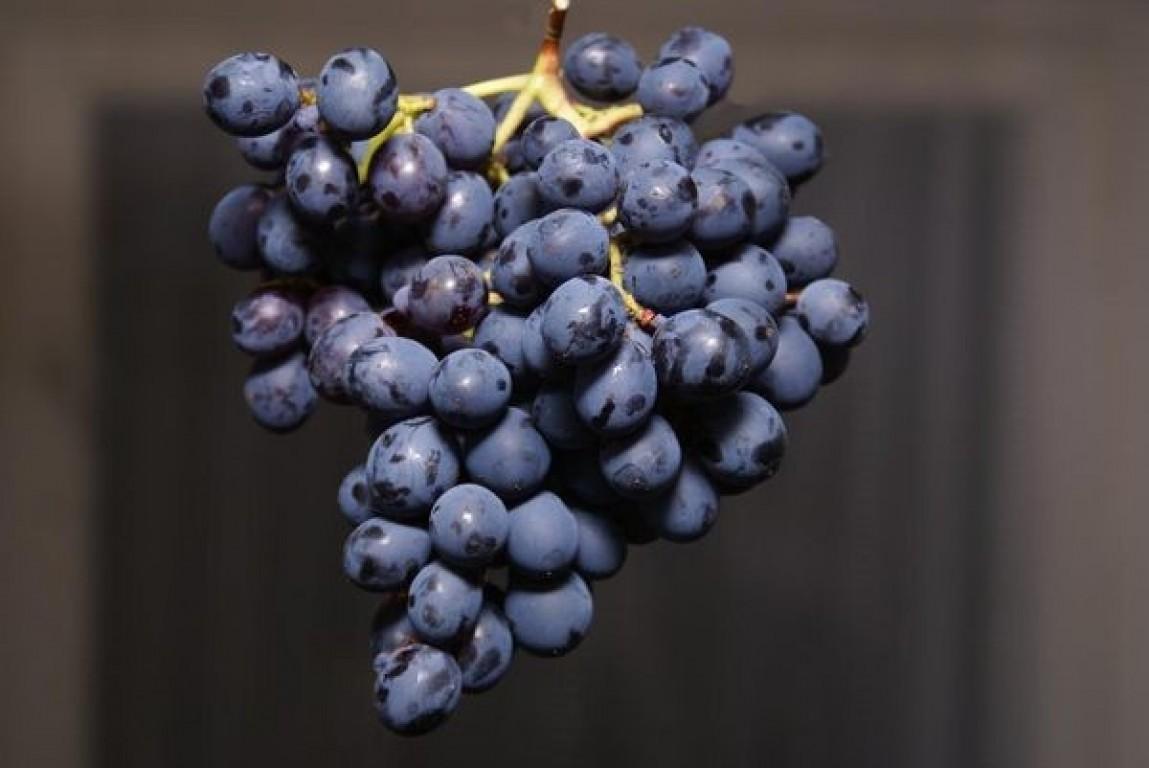 Ранние сорта винограда: характеристики и описание, отзывы