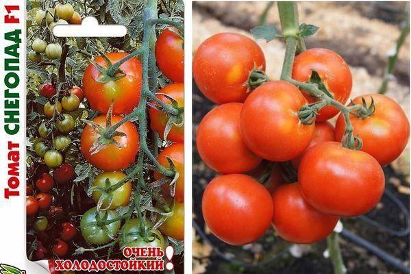 Характеристика томата Снегопад f1 и описание выращивания гибрида