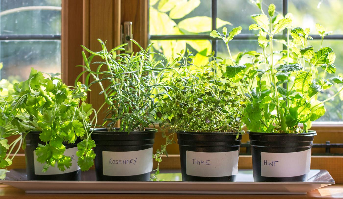 Как вырастить тимьян из семян в домашних условиях на подоконнике в горшке