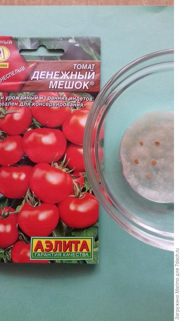 Как выращивать помидоры в открытом грунте – полное руководство от специалиста