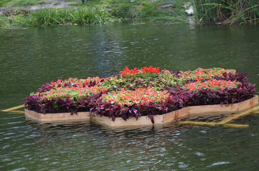 Популярные растения для водоема на даче — описание с фото