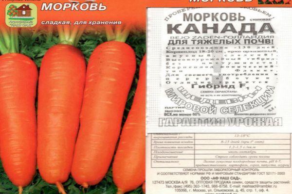 Морковь канада: отзывы, характеристика и урожайность сорта, фото