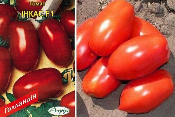 Томат инкас: описание, отзывы, фото, урожайность | tomatland.ru