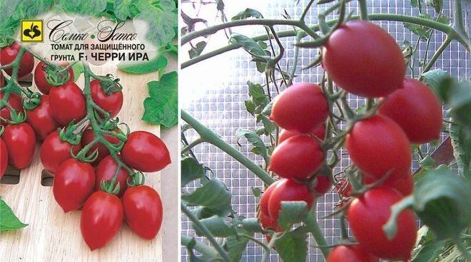 Описание и характеристика томатов сорта фараон, положительные качества