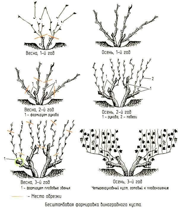 Описание трехлопастного миндаля и лучшие сорта, посадка и уход