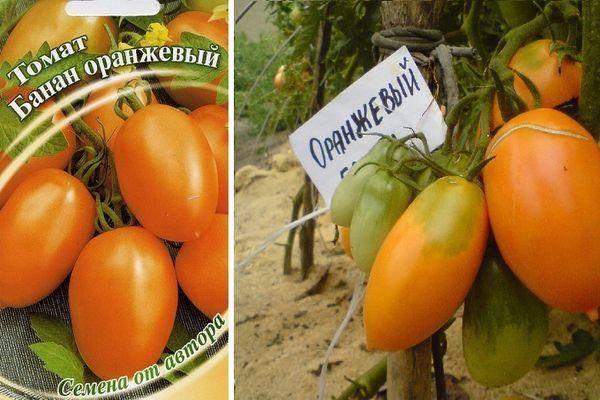 Томат банановые ноги: описание сорта, отзывы, фото, урожайность | tomatland.ru
