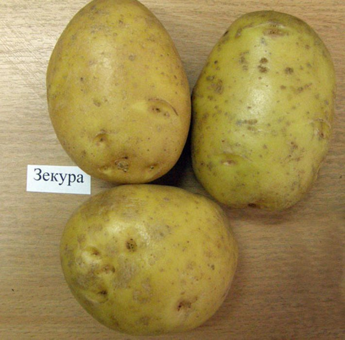 Картофель: описание 73 лучших сортов (фото)+отзывы - krrot.net