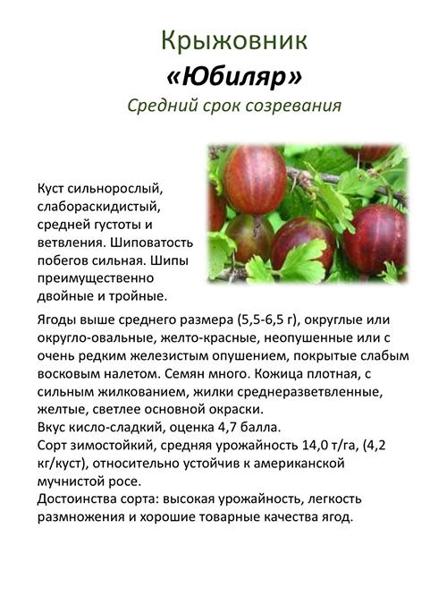 Сорта крыжовника для выращивания в беларуси.