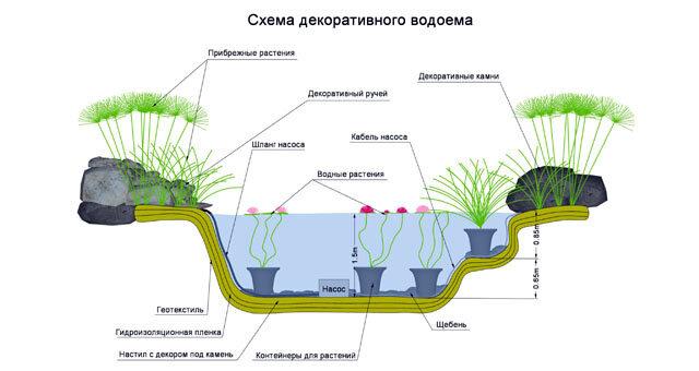 Как подготовить декоративный пруд к зиме: что делать с рыбами и растениями