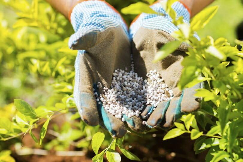 Чем подкормить цветы на даче осенью весной и летом рецепты подкормок цветов в открытом грунте когда подкармливать