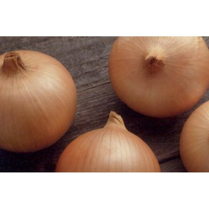 Лук кэнди: описание, выращивание и уход за гибридным сортом с фото
