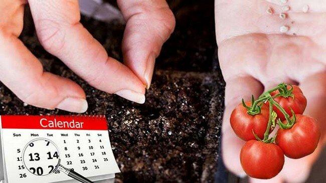 Когда сажать рассаду в 2021 году: сроки посева, благоприятные дни