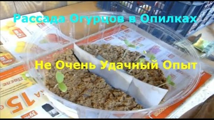 Огурец: способы посадки, выращивание и уход