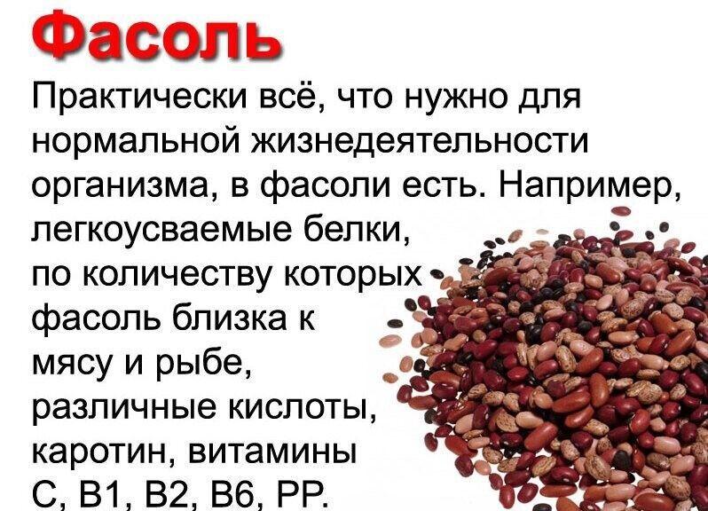 Красная фасоль: польза и вред для организма человека