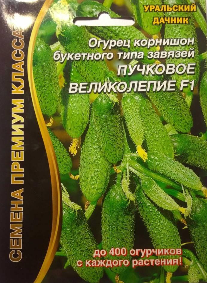 Описание огурцов изумрудная семейка, выращивание и уход за гибридом