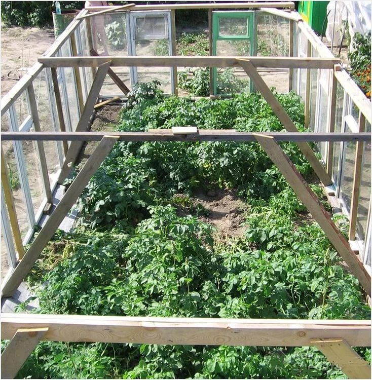 Как сделать парник своими руками - 105 фото постройки в домашних условиях парника для огурцов и помидоров