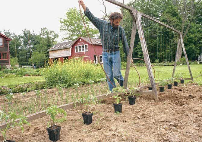 Шпалера для помидоров своими руками: как правильно сделать с видео и фото