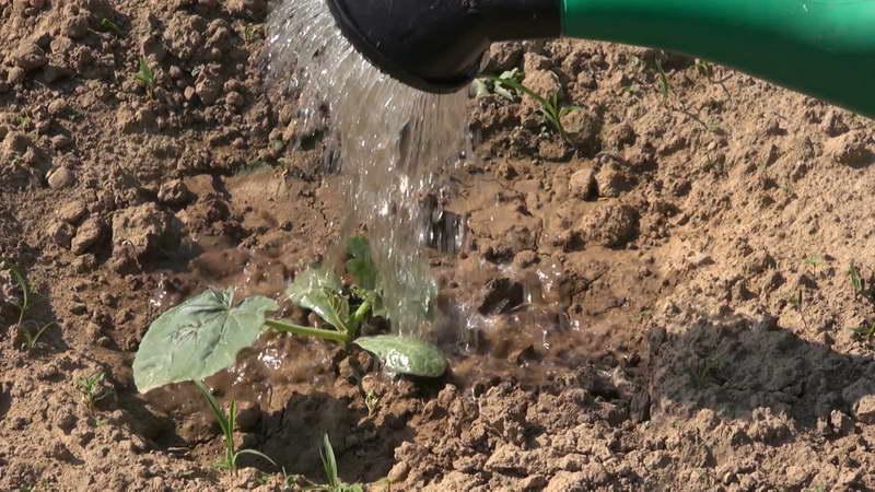 Как подкормить морковь солью с водой в открытом грунте: можно ли нанести вред урожаю таким поливом, какие пропорции надо соблюдать при приготовлении средства? русский фермер