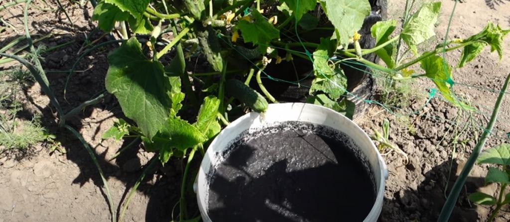 Как подкормить огурцы мочевиной: применение удобрения на огороде