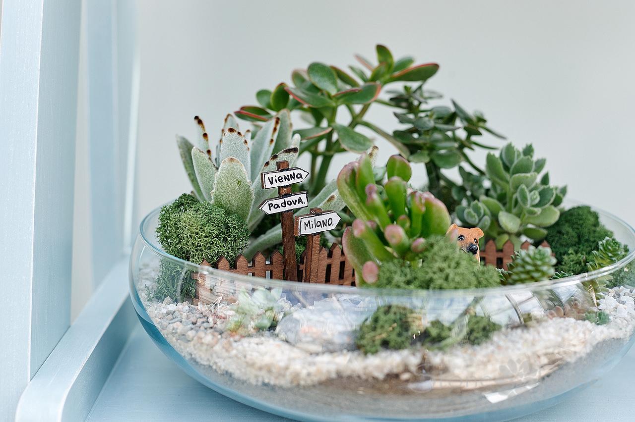 Цветочные композиции из комнатных растений и цветов в одном горшке: фото, правила составления