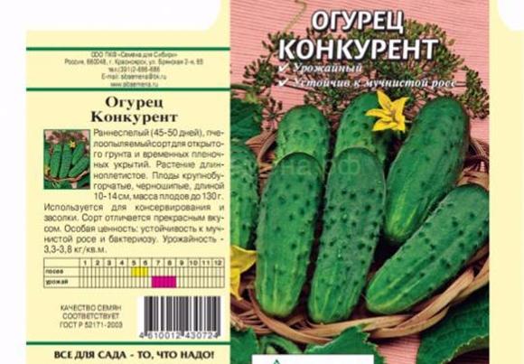 """Огурец """"конкурент"""": описание сорта и агротехника выращивания"""
