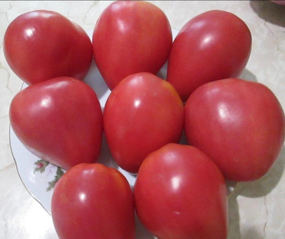 Урожайность томата мазарини. особенности выращивания