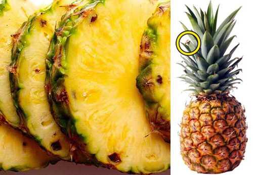 Ананас — польза и вред, состав, калорийность. как выбрать ананас, рецепты приготовления