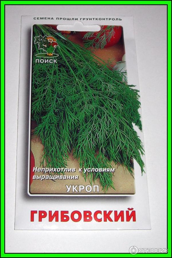 19 сортов укропа ? с фото и описанием на зелень без зонтиков и с ними