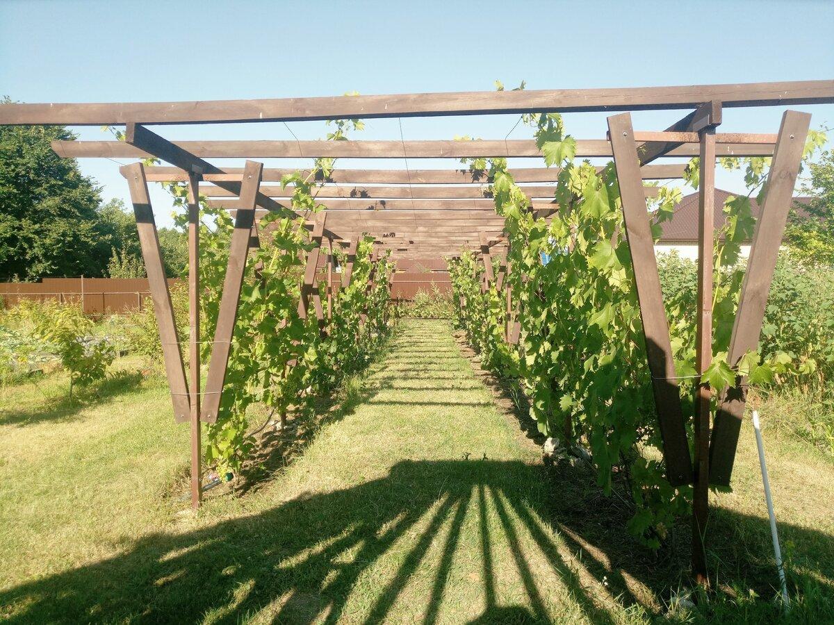 Опора: пергола для винограда своими руками. как сделать