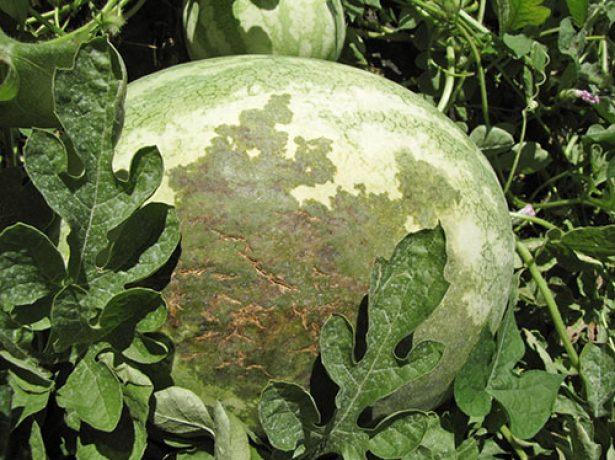 Лечение пародонтоза в домашних условиях   компетентно о здоровье на ilive