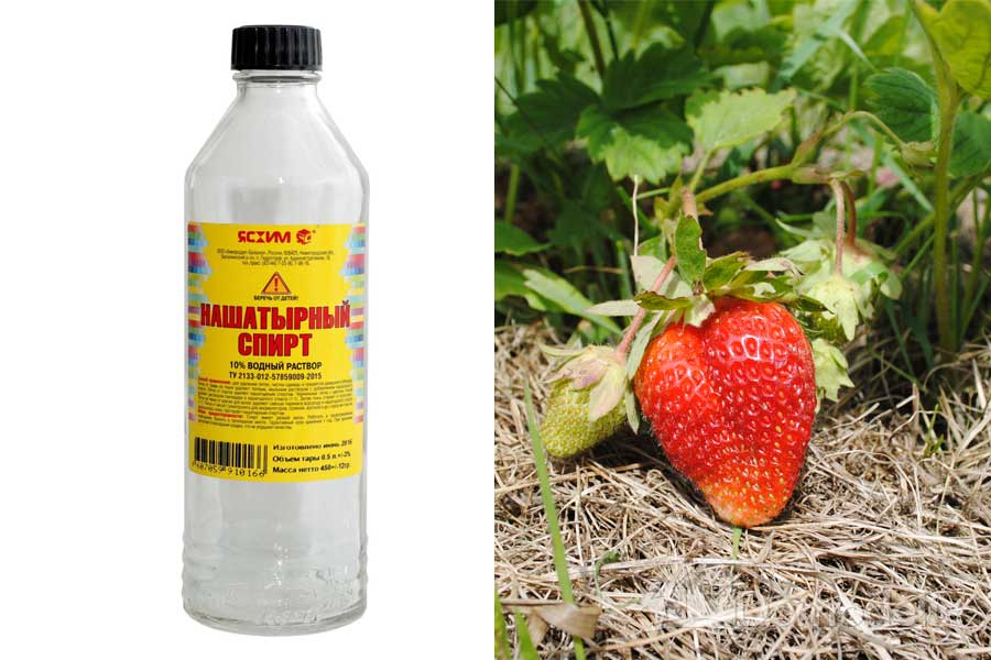 Можно ли поливать укроп нашатырным спиртом, как действует на растение? пошаговая инструкция по подкормке