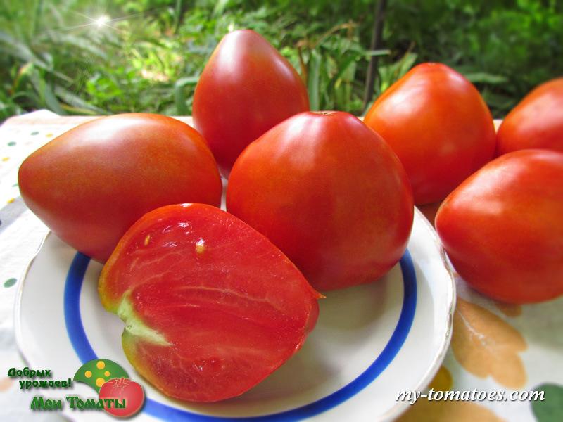 Описание и характеристики сорта томата курносик - всё про сады