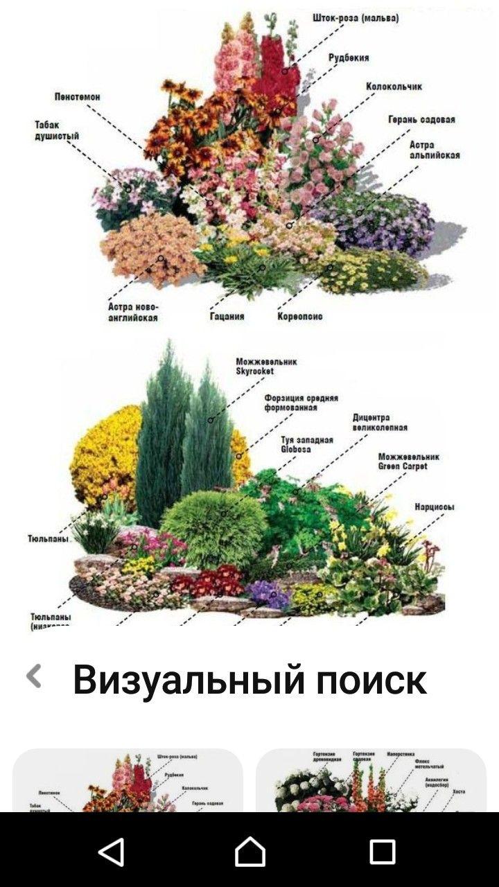 Цвет в ландшафтном дизайне