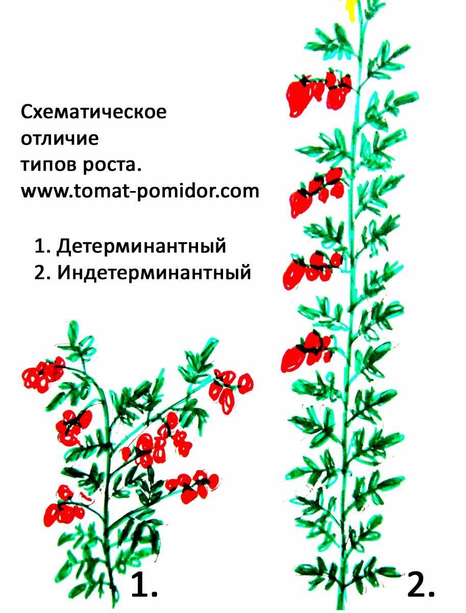 Штамбовые томаты: что это такое, лучшие сорта открытого грунта и для теплиц