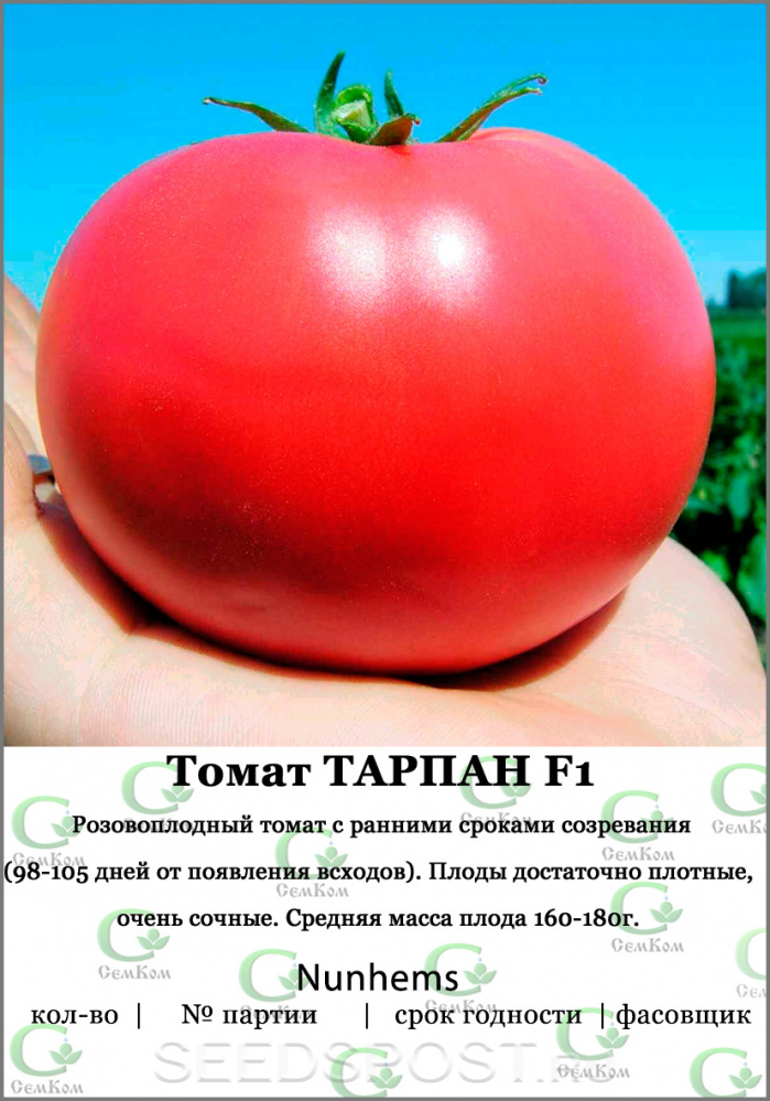 ᐉ помидор «тарпан» f1: описание сорта, фото и основные характеристики томата - orensad198.ru