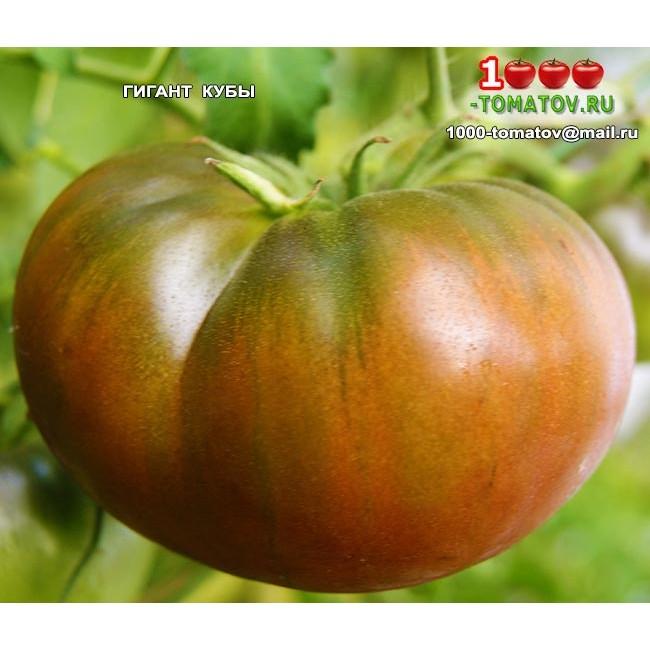 Лучшие крупноплодные сорта томатов для теплиц подмосковья, сибири, урала: описание, характеристика, фото и видео