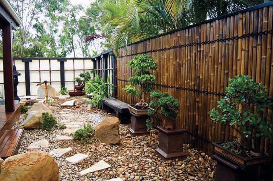 Бамбук в домашних условиях: посадка и уход   (фото) +отзывы