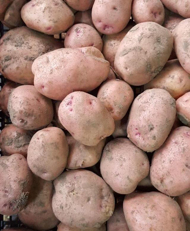 Описание и характеристика картофеля сорта Тимо