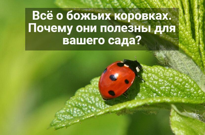 Полезные насекомые и животные на даче и огороде. - огород, сад, балкон - медиаплатформа миртесен
