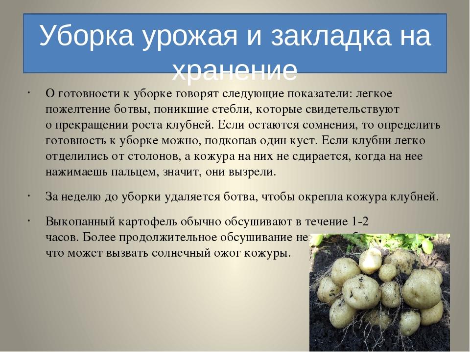 Когда убирать морковь с грядки на хранение в домашних условиях, как правильно ее выкапывать и помещать в погреб на зиму, а также какие лучшие сорта есть для этого? selo.guru — интернет портал о сельском хозяйстве
